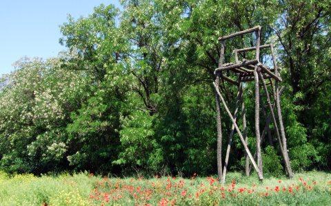 """Šuma između Debeljače i Padine - """"Bucka"""""""